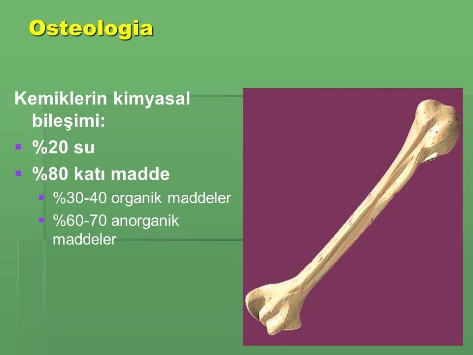 Osteologia Kemiklerin kimyasal bileşimi: %20 su %80 katı madde