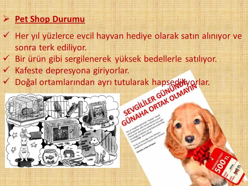 Pet Shop Durumu Her yıl yüzlerce evcil hayvan hediye olarak satın alınıyor ve sonra terk ediliyor.