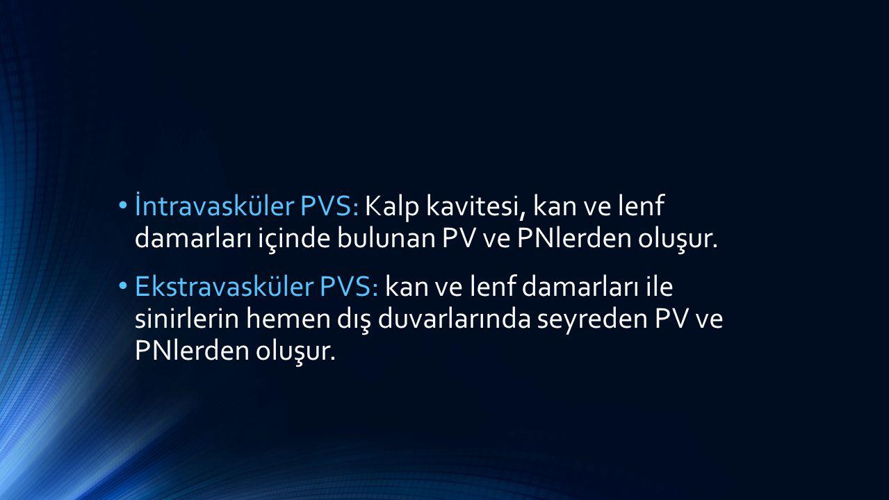 İntravasküler PVS: Kalp kavitesi, kan ve lenf damarları içinde bulunan PV ve PNlerden oluşur.