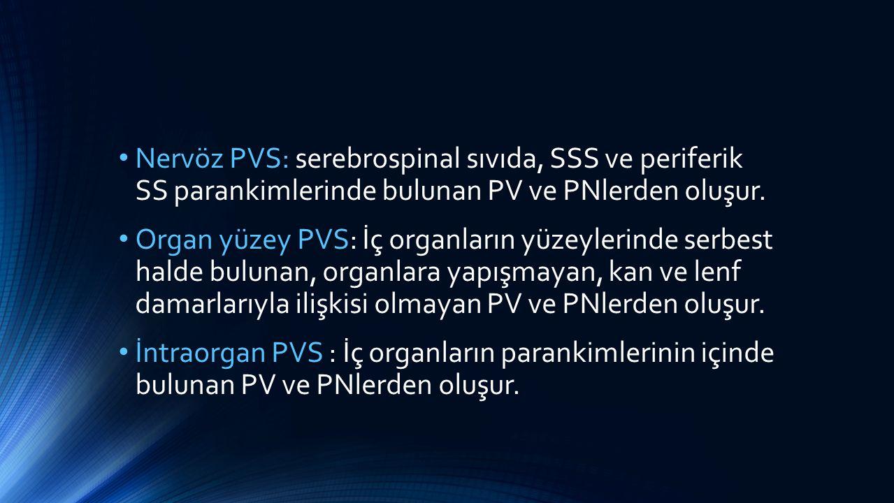 Nervöz PVS: serebrospinal sıvıda, SSS ve periferik SS parankimlerinde bulunan PV ve PNlerden oluşur.