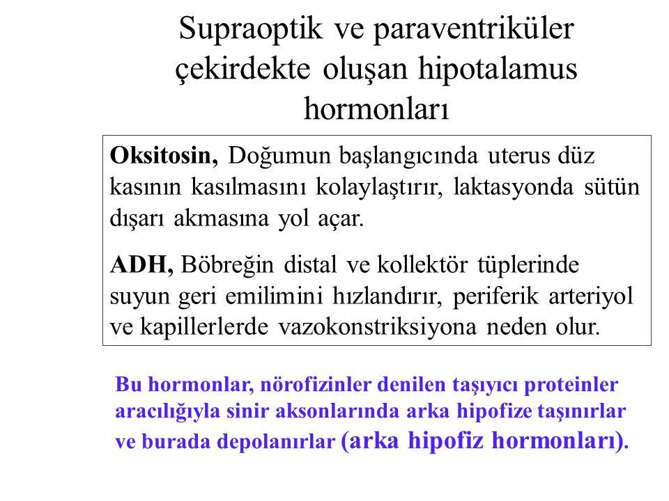Supraoptik ve paraventriküler çekirdekte oluşan hipotalamus hormonları