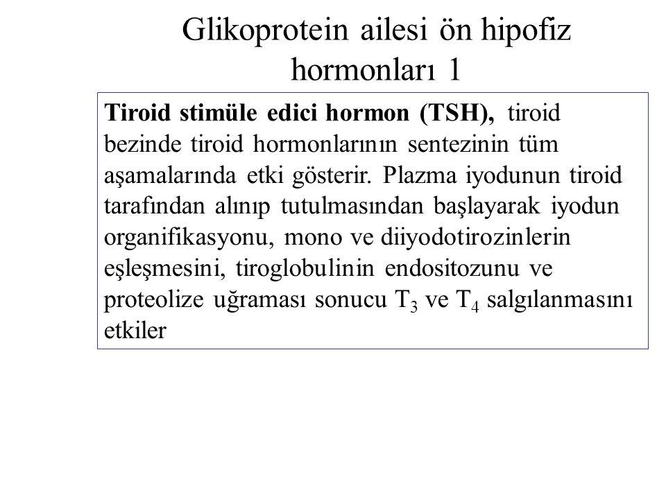 Glikoprotein ailesi ön hipofiz hormonları 1