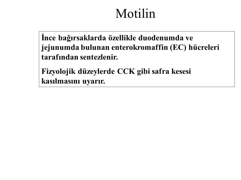 Motilin İnce bağırsaklarda özellikle duodenumda ve jejunumda bulunan enterokromaffin (EC) hücreleri tarafından sentezlenir.