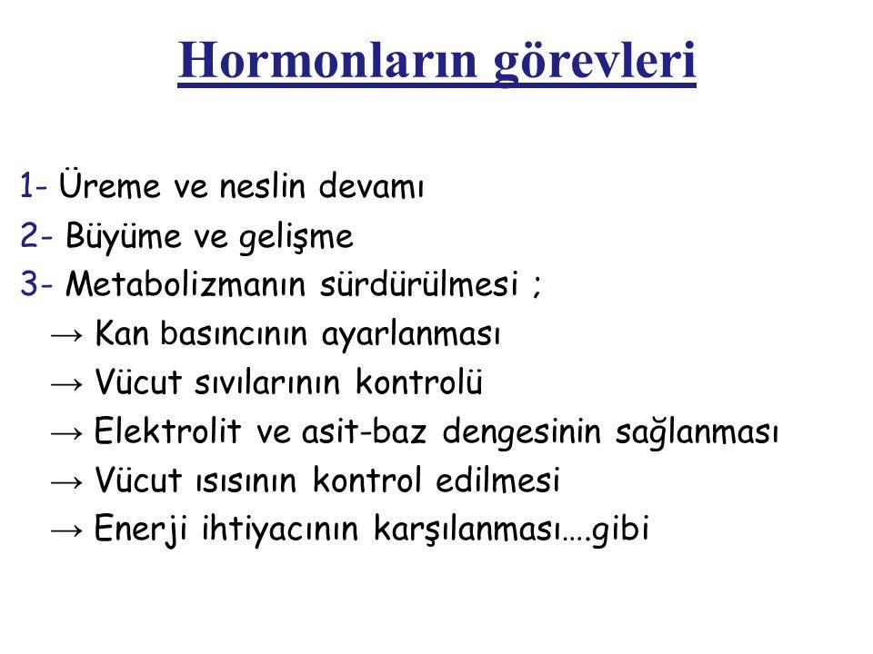 Hormonların görevleri