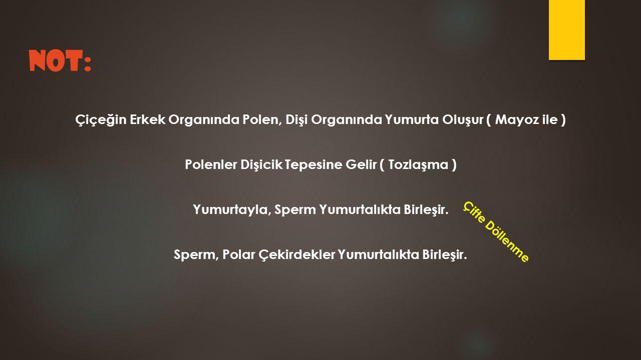 NOT: Çiçeğin Erkek Organında Polen, Dişi Organında Yumurta Oluşur ( Mayoz ile ) Polenler Dişicik Tepesine Gelir ( Tozlaşma )