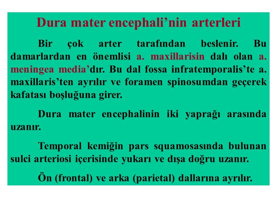 Dura mater encephali'nin arterleri