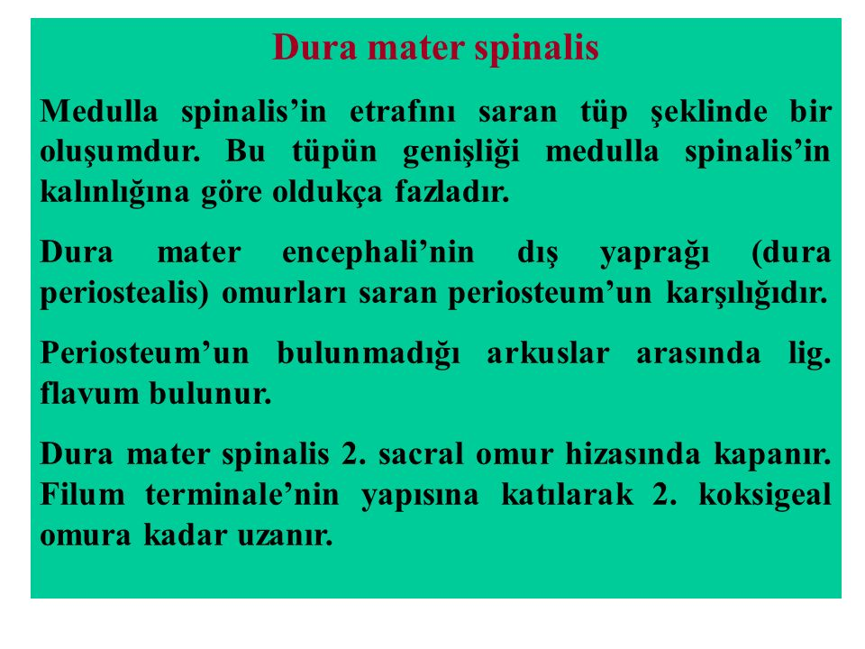 Dura mater spinalis