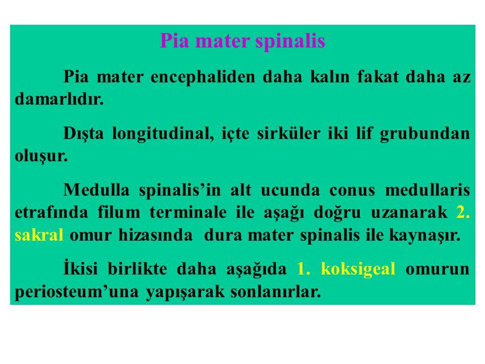 Pia mater spinalis Pia mater encephaliden daha kalın fakat daha az damarlıdır. Dışta longitudinal, içte sirküler iki lif grubundan oluşur.