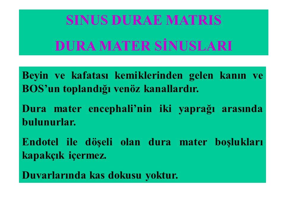 SINUS DURAE MATRIS DURA MATER SİNUSLARI