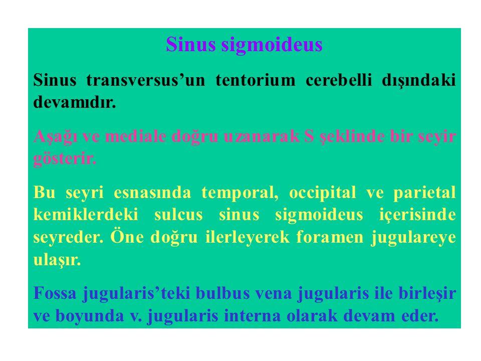 Sinus sigmoideus Sinus transversus'un tentorium cerebelli dışındaki devamıdır. Aşağı ve mediale doğru uzanarak S şeklinde bir seyir gösterir.