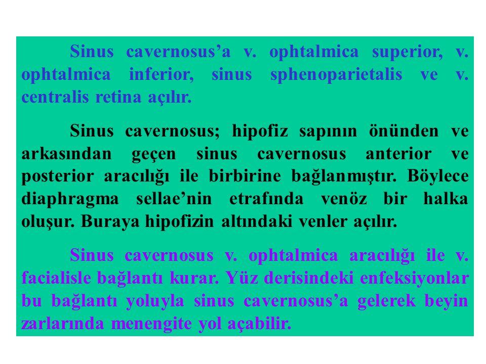 Sinus cavernosus'a v. ophtalmica superior, v