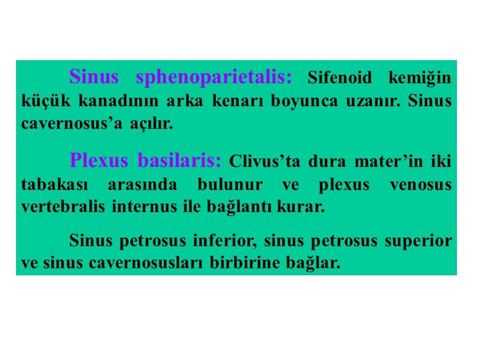 Sinus sphenoparietalis: Sifenoid kemiğin küçük kanadının arka kenarı boyunca uzanır. Sinus cavernosus'a açılır.