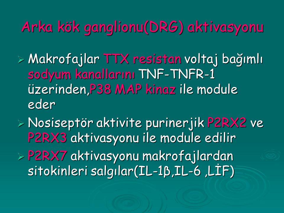 Arka kök ganglionu(DRG) aktivasyonu