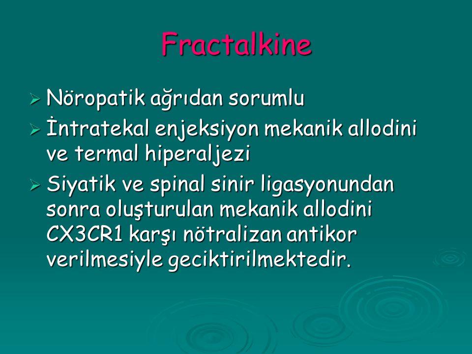 Fractalkine Nöropatik ağrıdan sorumlu