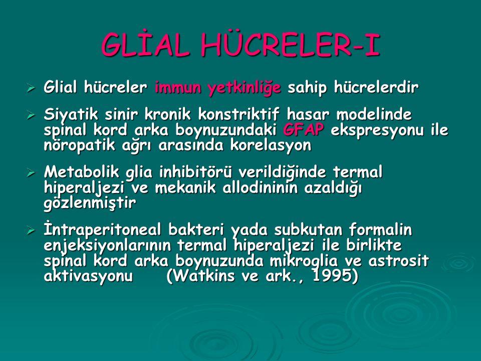 GLİAL HÜCRELER-I Glial hücreler immun yetkinliğe sahip hücrelerdir