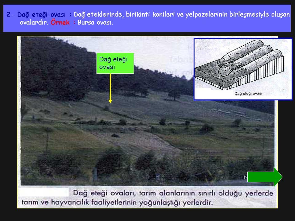 2- Dağ eteği ovası : Dağ eteklerinde, birikinti konileri ve yelpazelerinin birleşmesiyle oluşan