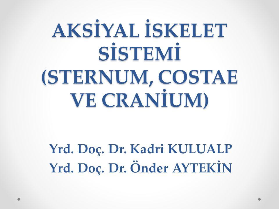 AKSİYAL İSKELET SİSTEMİ (STERNUM, COSTAE VE CRANİUM)
