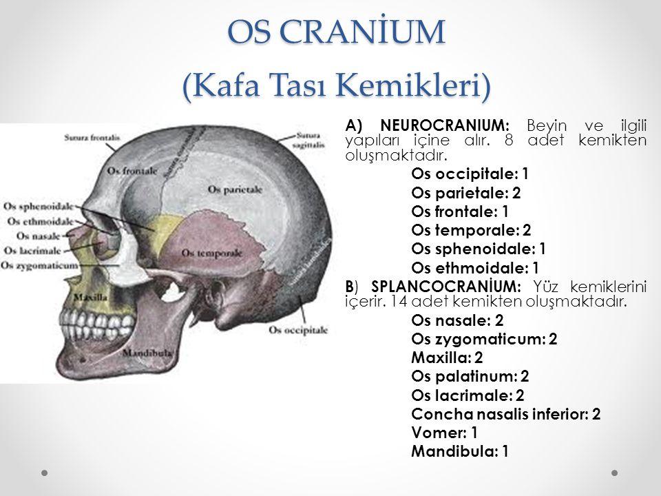 OS CRANİUM (Kafa Tası Kemikleri)