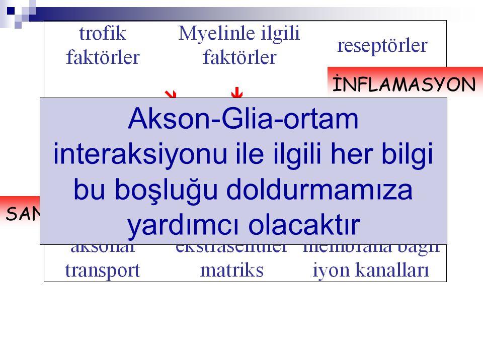 İNFLAMASYON Akson-Glia-ortam interaksiyonu ile ilgili her bilgi bu boşluğu doldurmamıza yardımcı olacaktır.