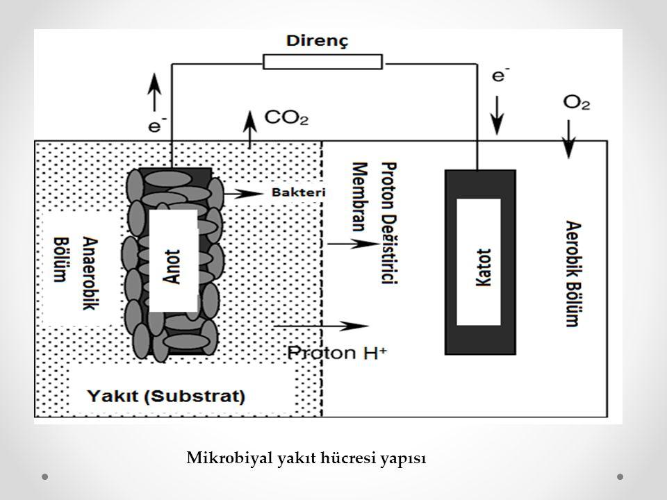 Mikrobiyal yakıt hücresi yapısı