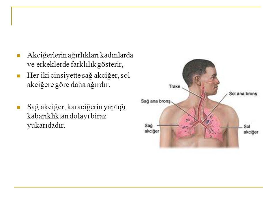 Akciğerlerin ağırlıkları kadınlarda ve erkeklerde farklılık gösterir,