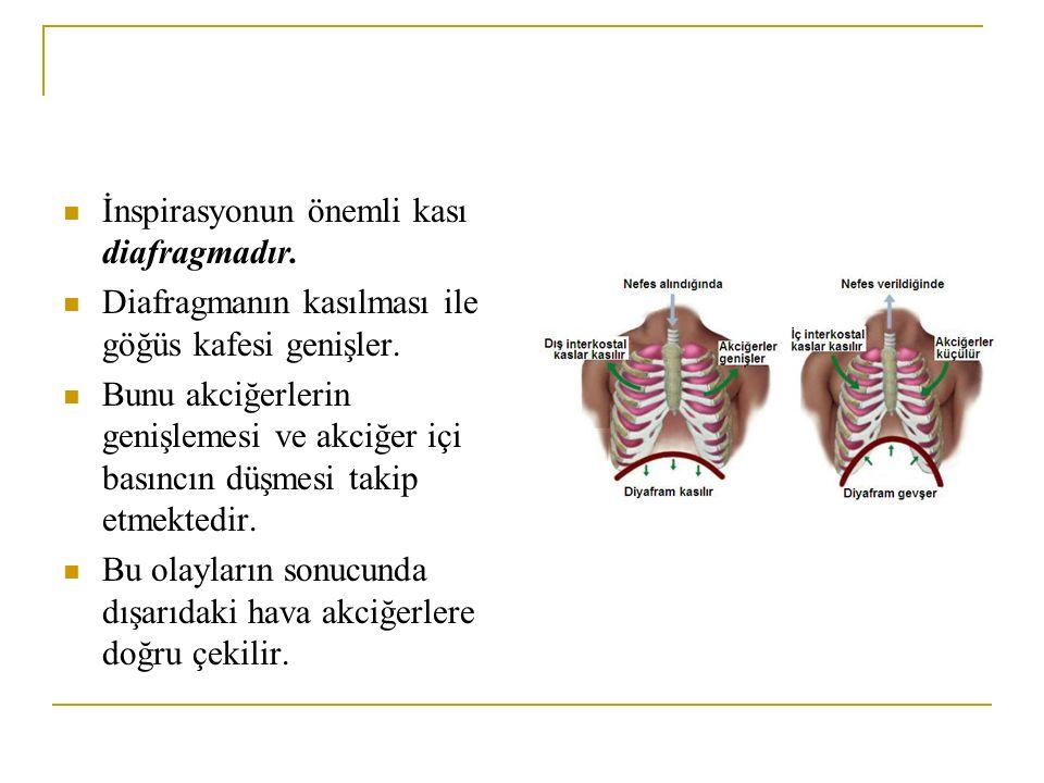 İnspirasyonun önemli kası diafragmadır.
