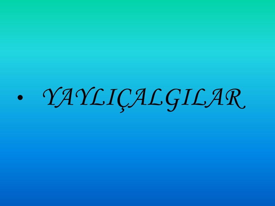 YAYLIÇALGILAR
