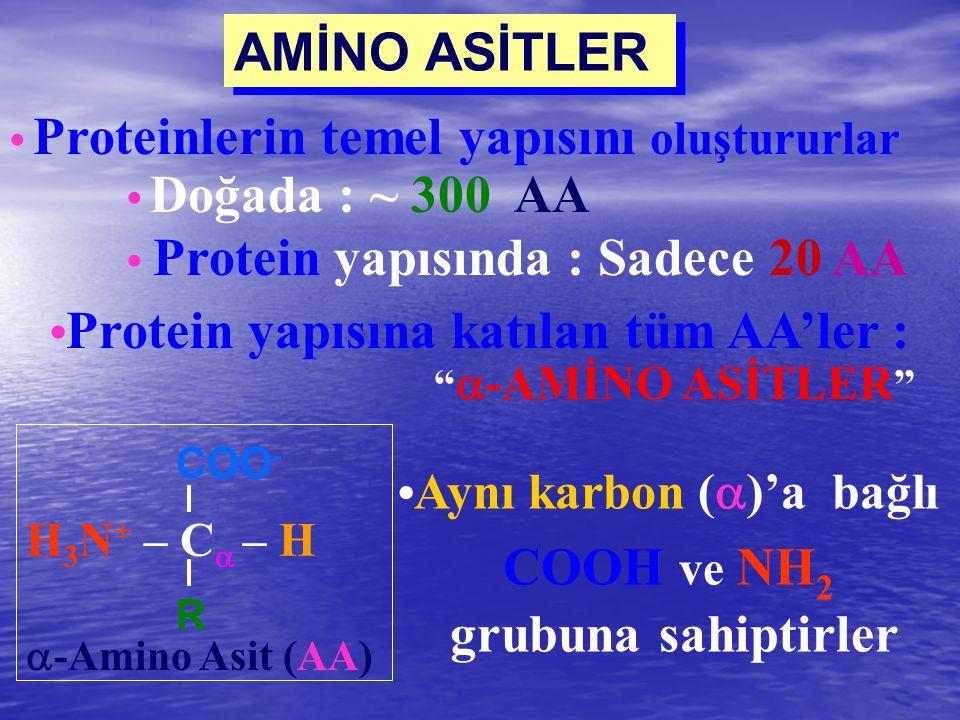 AMİNO ASİTLER COOH ve NH2 •Protein yapısına katılan tüm AA'ler :
