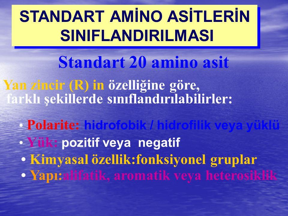 STANDART AMİNO ASİTLERİN