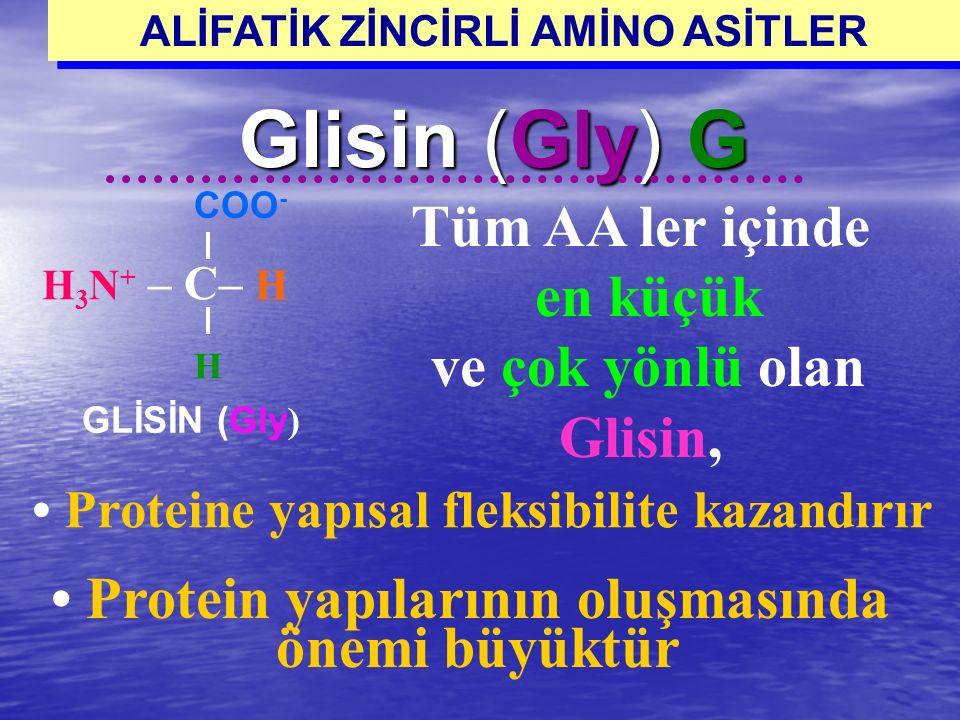 ALİFATİK ZİNCİRLİ AMİNO ASİTLER • Protein yapılarının oluşmasında