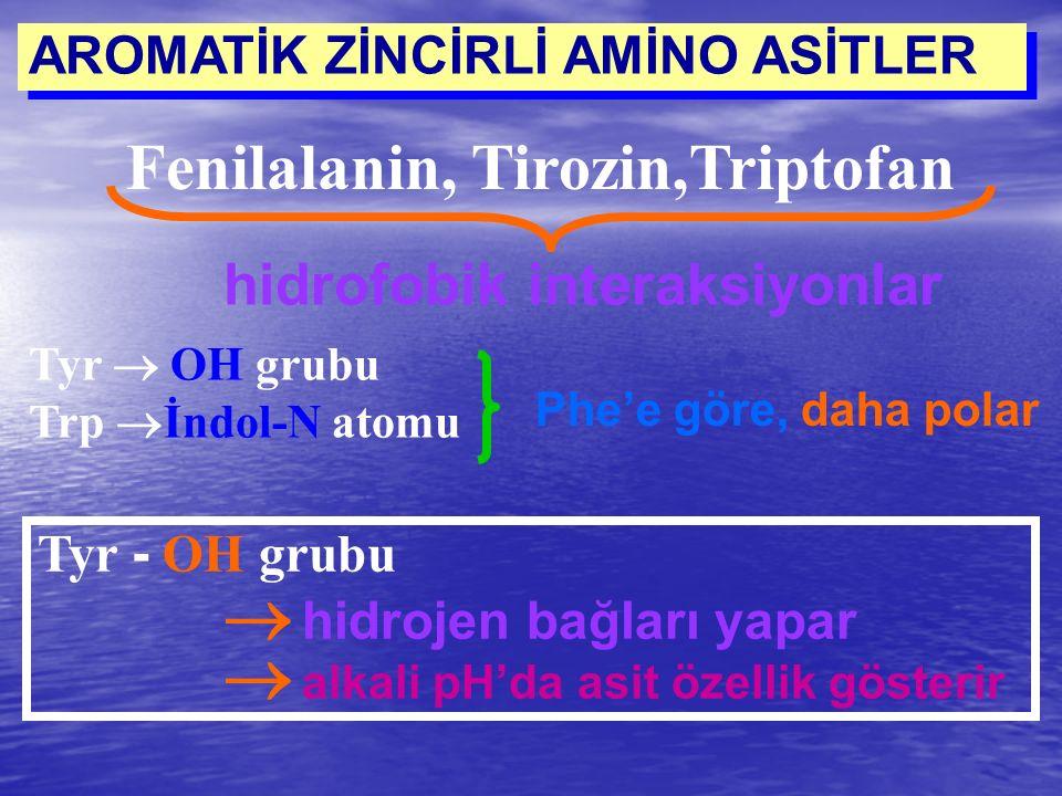 Fenilalanin, Tirozin,Triptofan