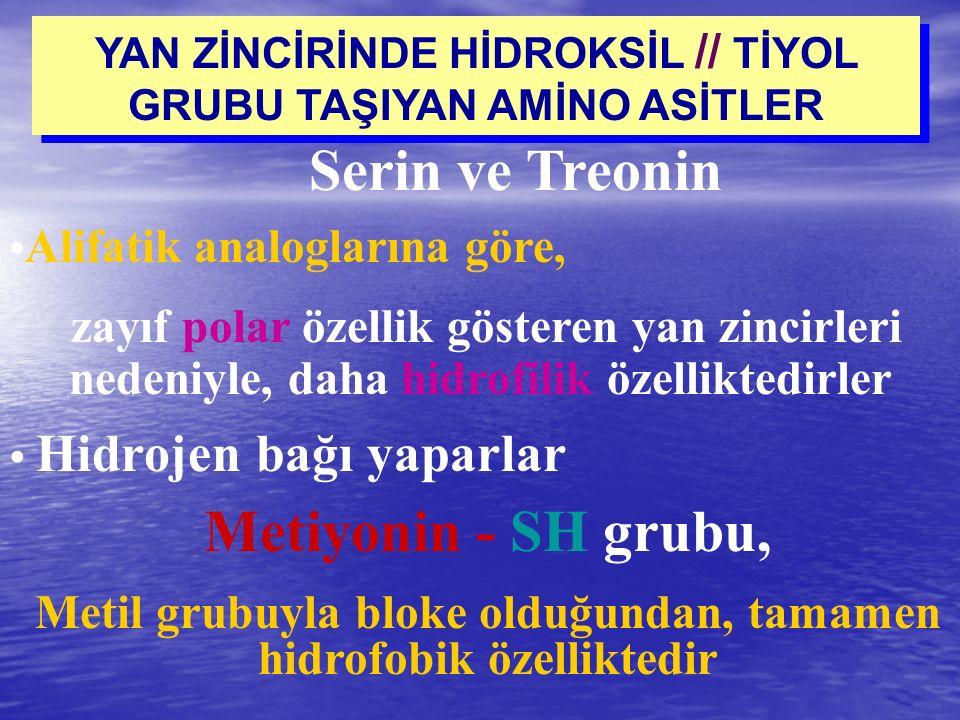 YAN ZİNCİRİNDE HİDROKSİL // TİYOL GRUBU TAŞIYAN AMİNO ASİTLER