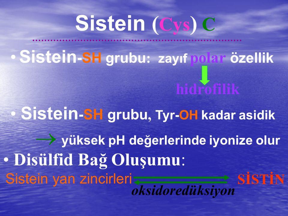 Sistein (Cys) C • Sistein-SH grubu: zayıf polar özellik