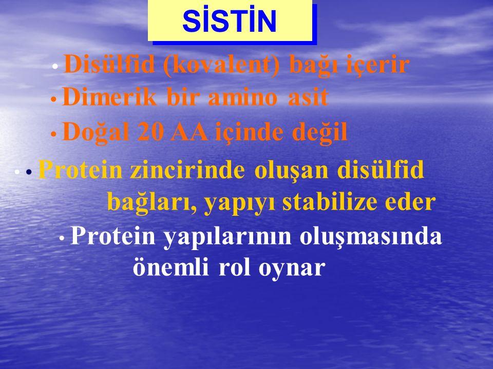 SİSTİN • Disülfid (kovalent) bağı içerir • Dimerik bir amino asit