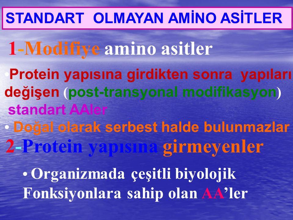 1-Modifiye amino asitler