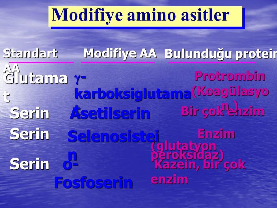 Protrombin (Koagülasyon )