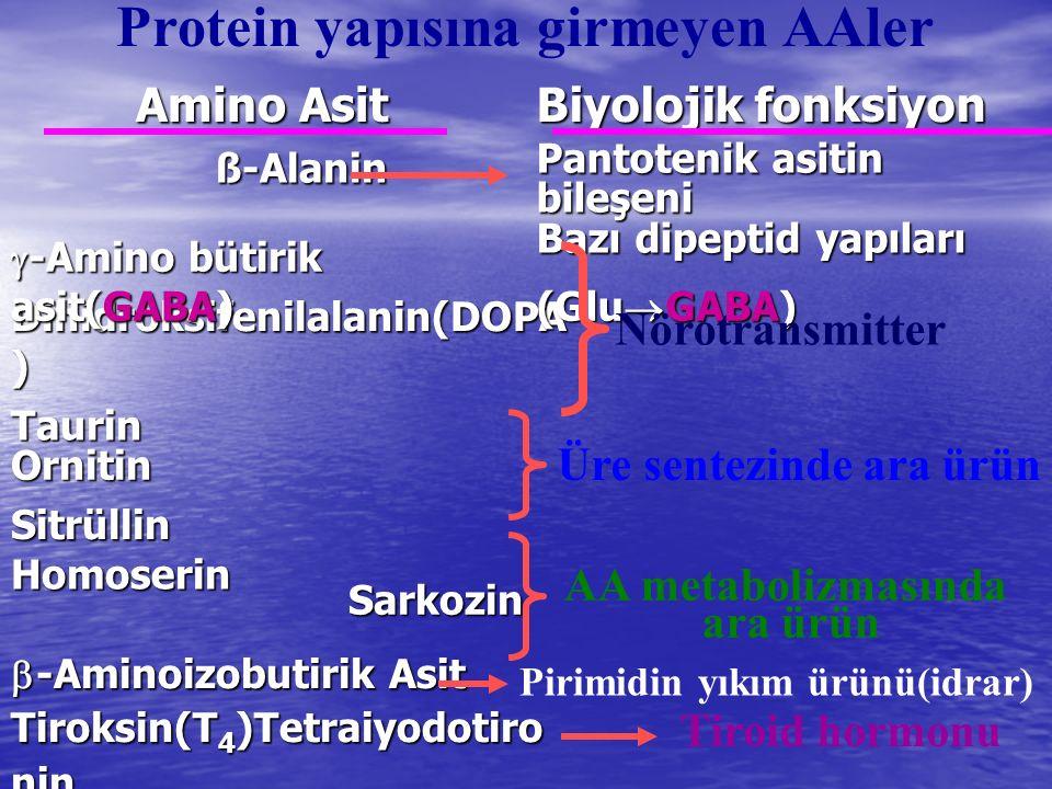 Protein yapısına girmeyen AAler