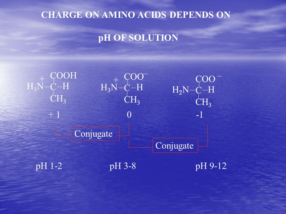 CHARGE ON AMINO ACIDS DEPENDS ON