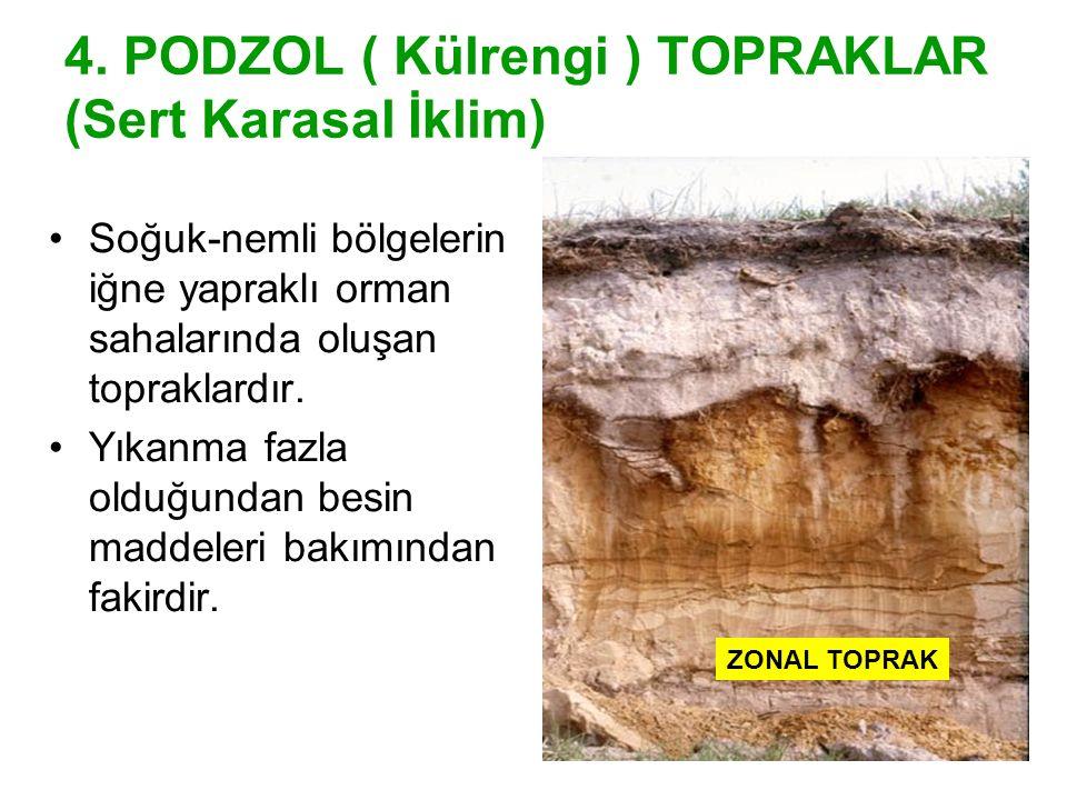4. PODZOL ( Külrengi ) TOPRAKLAR (Sert Karasal İklim)