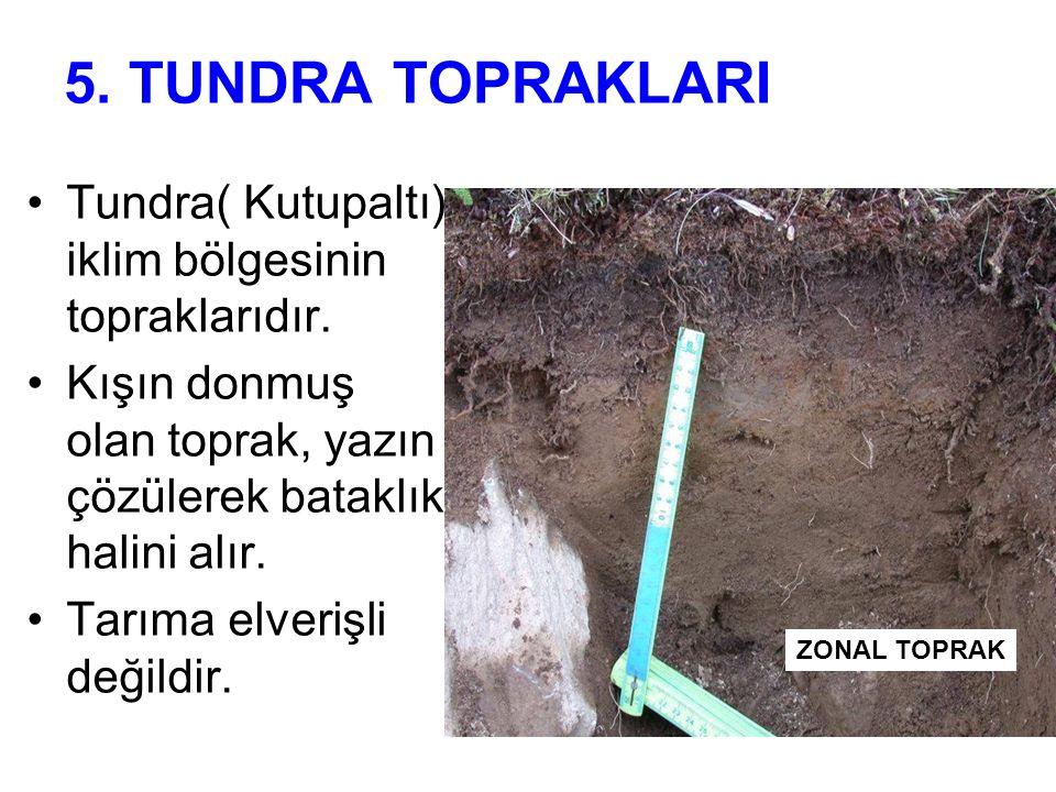 5. TUNDRA TOPRAKLARI Tundra( Kutupaltı) iklim bölgesinin topraklarıdır. Kışın donmuş olan toprak, yazın çözülerek bataklık halini alır.