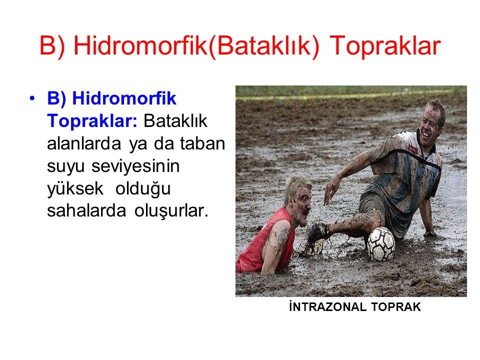B) Hidromorfik(Bataklık) Topraklar