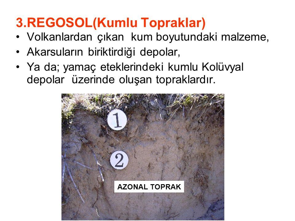 3.REGOSOL(Kumlu Topraklar)