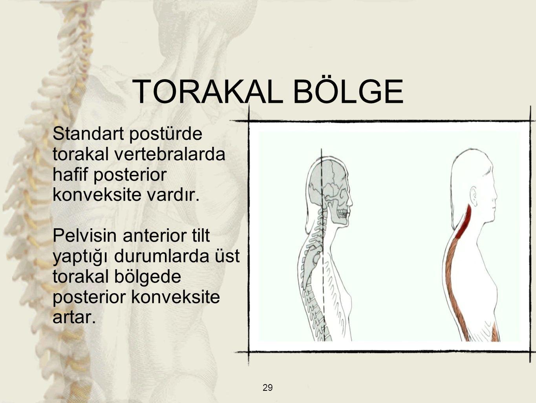 TORAKAL BÖLGE Standart postürde torakal vertebralarda hafif posterior konveksite vardır.