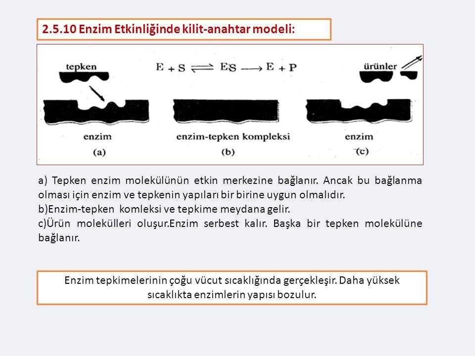 2.5.10 Enzim Etkinliğinde kilit-anahtar modeli: