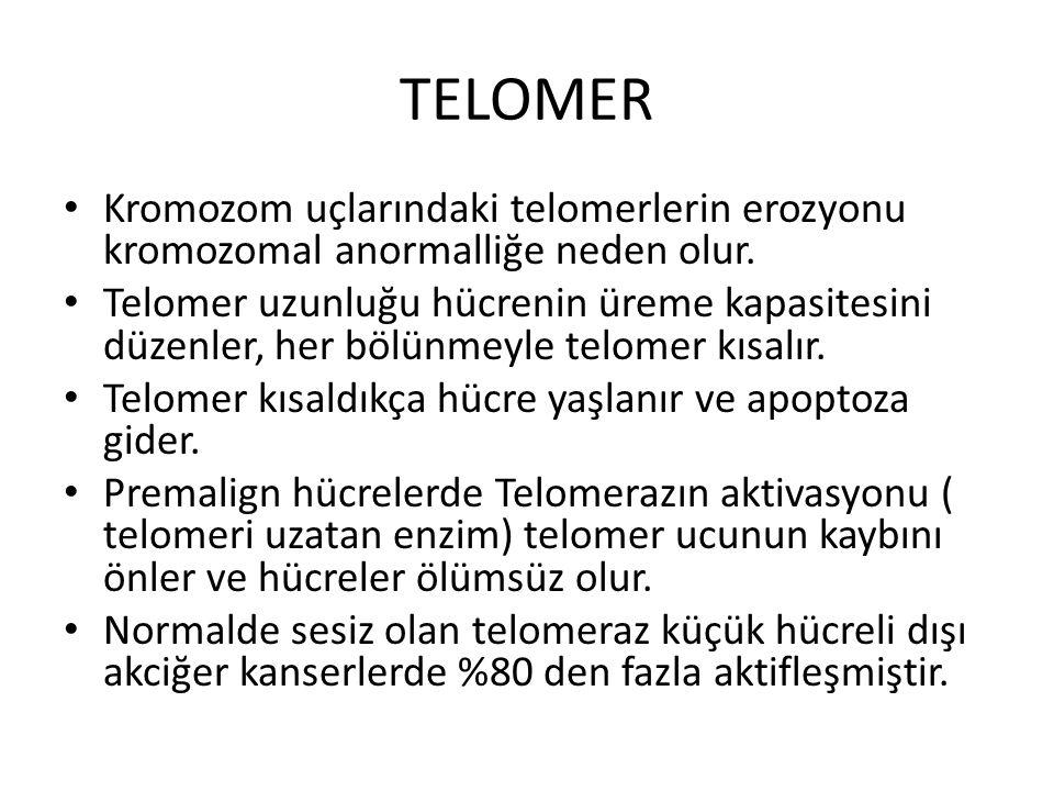 TELOMER Kromozom uçlarındaki telomerlerin erozyonu kromozomal anormalliğe neden olur.