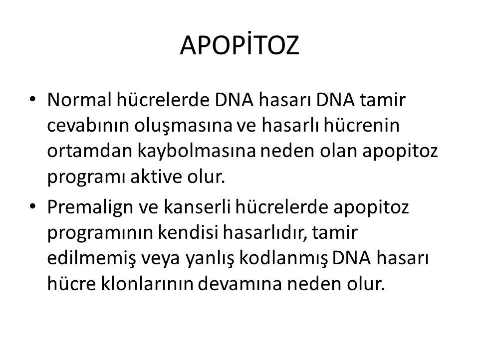 APOPİTOZ