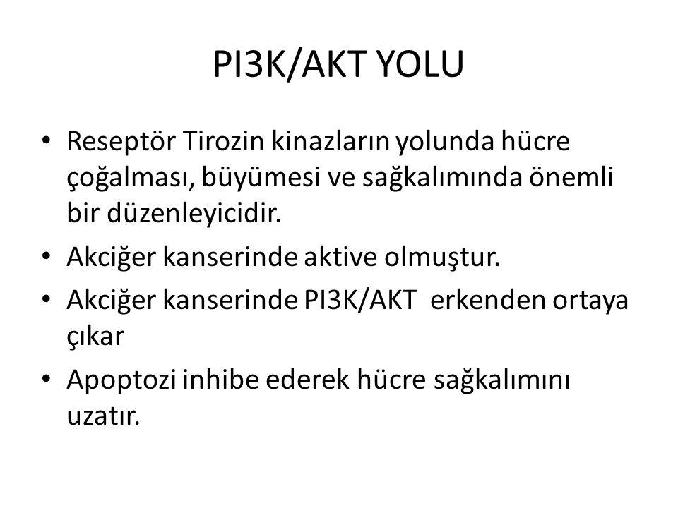 PI3K/AKT YOLU Reseptör Tirozin kinazların yolunda hücre çoğalması, büyümesi ve sağkalımında önemli bir düzenleyicidir.