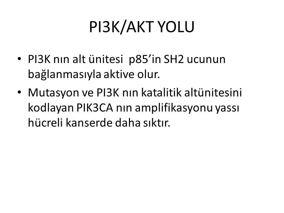 PI3K/AKT YOLU PI3K nın alt ünitesi p85'in SH2 ucunun bağlanmasıyla aktive olur.