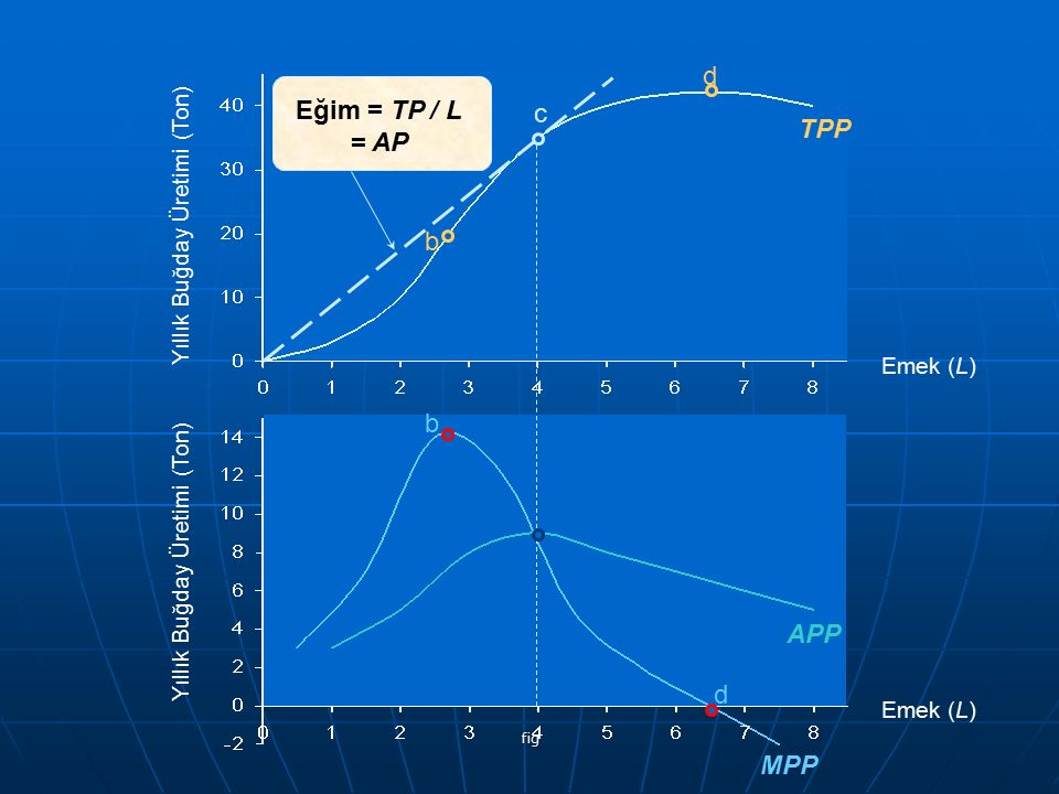 Eğim = TP / L = AP TPP APP MPP