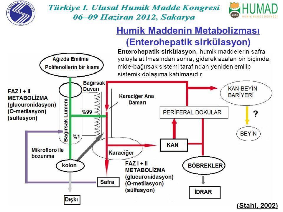 Humik Maddenin Metabolizması (Enterohepatik sirkülasyon)